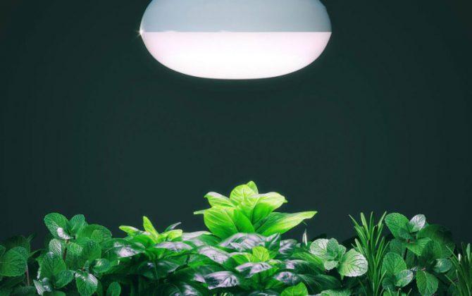 led žiarovka pre rast rastlín 12w e27 3 670x420 - LED žiarovka pre rast rastlín 12W, E27, IP44